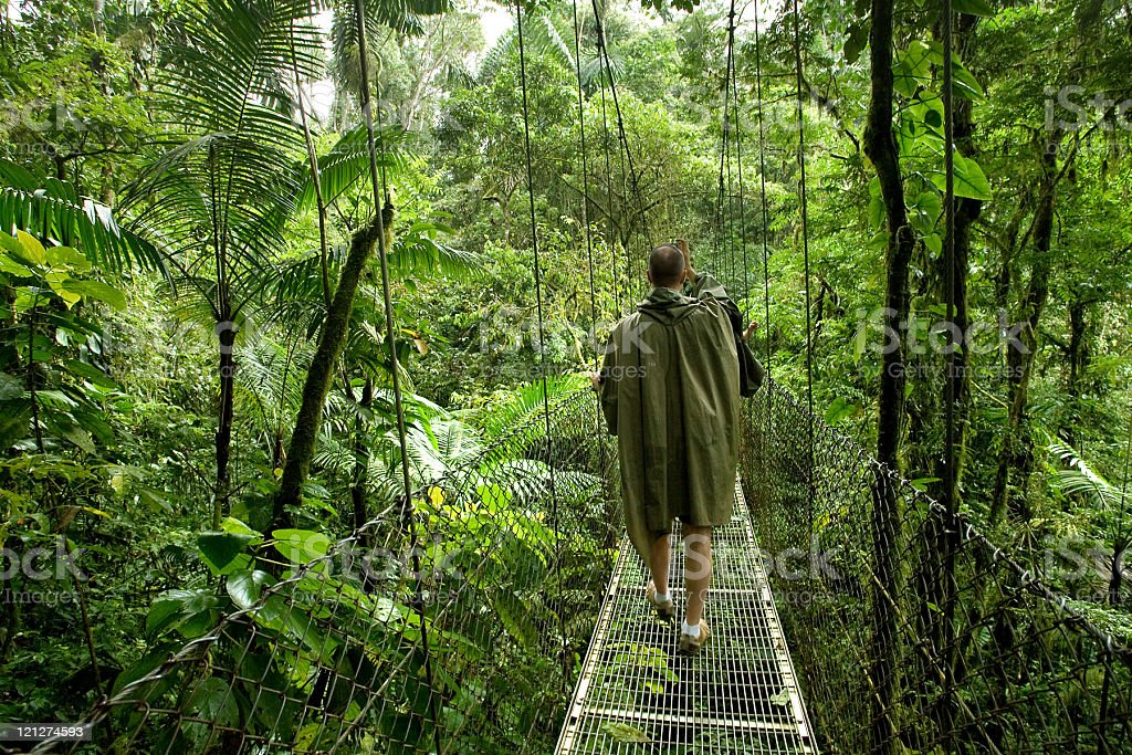 Rainforest Canopy Bridge with Person stock photo