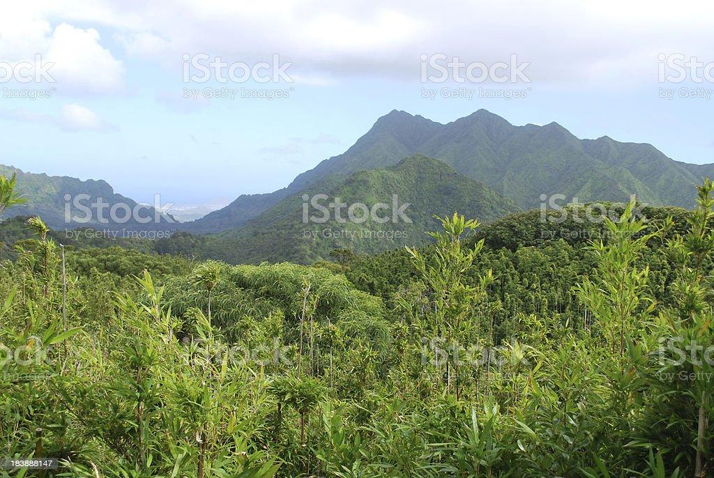Rainforest Canopy in Koolau Mountains, Hawaii stock photo