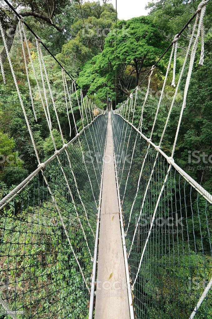 Rainforest Canopy Walkway royalty-free stock photo
