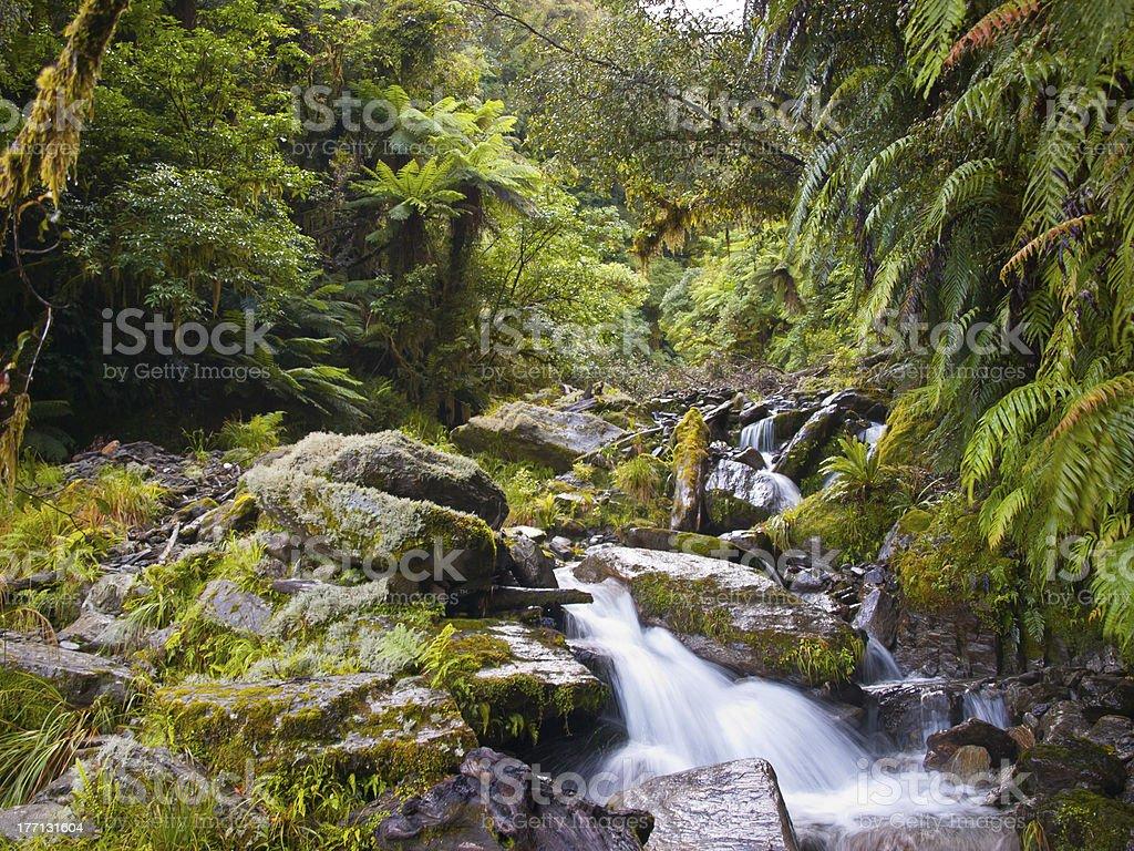 rainforest creek royalty-free stock photo
