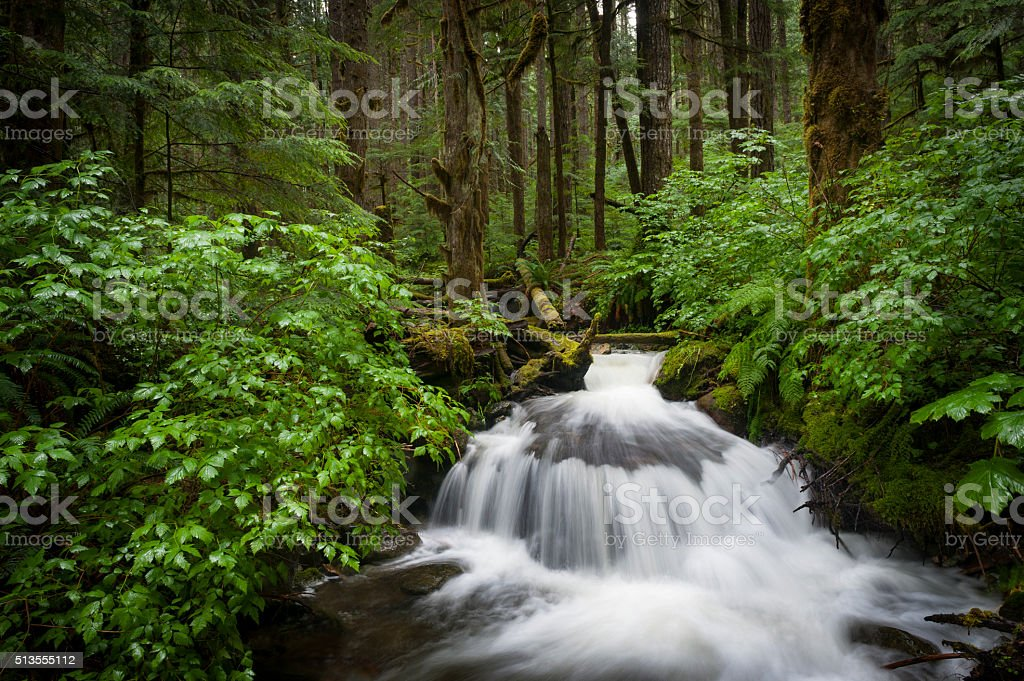 Rainforest Creek stock photo
