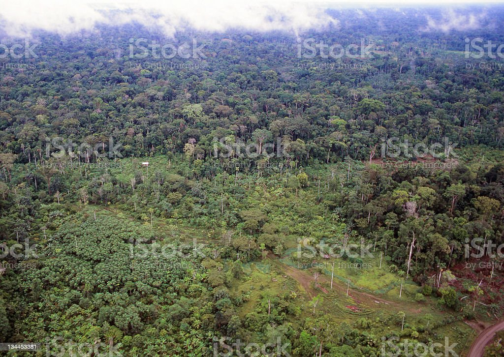 Rainforest deforestation royalty-free stock photo
