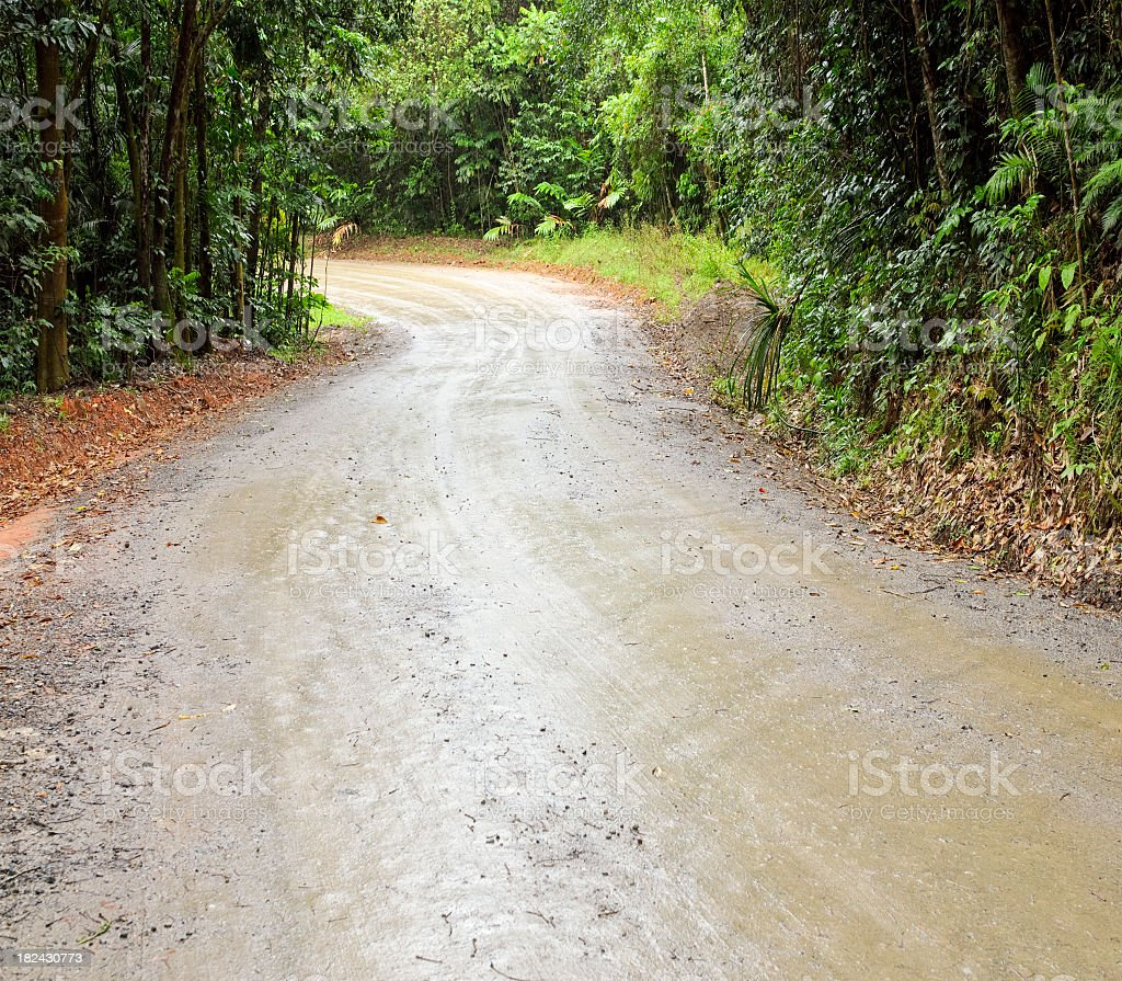 Rainforest Dirt Road royalty-free stock photo