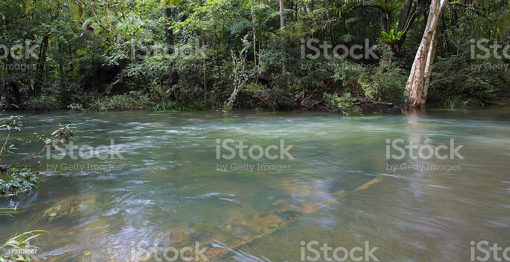 Rainforest Flooded Causeway royalty-free stock photo