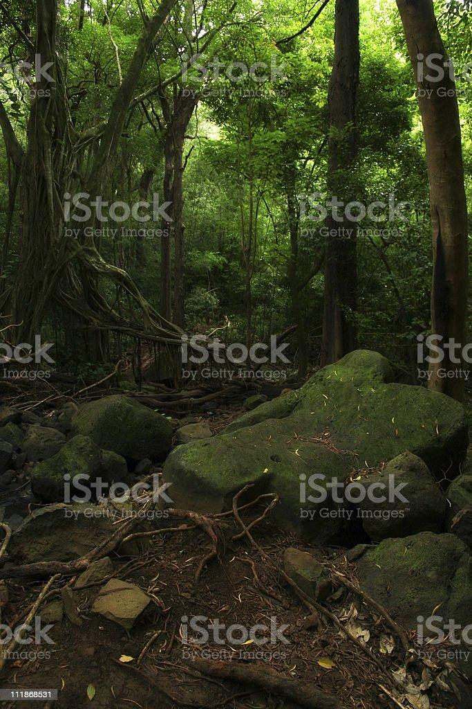 Rainforest Floor royalty-free stock photo