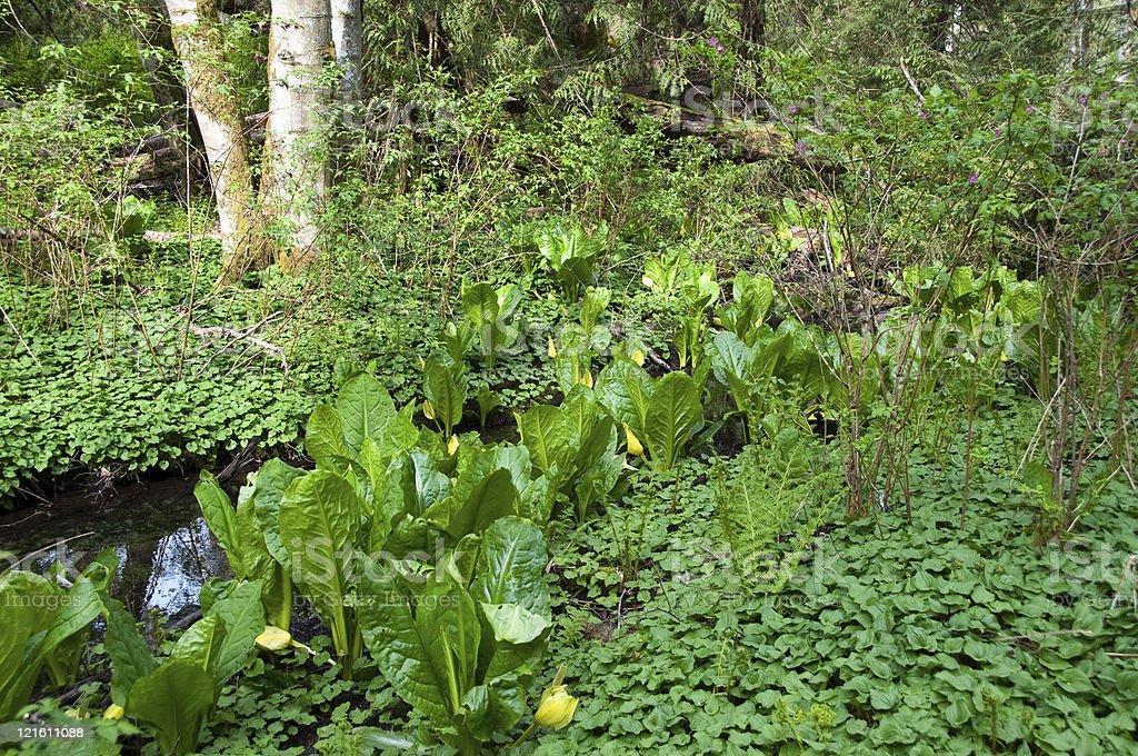 Rainforest Flora stock photo