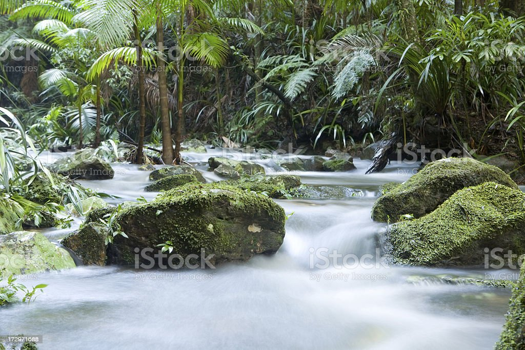 Rainforest flow royalty-free stock photo