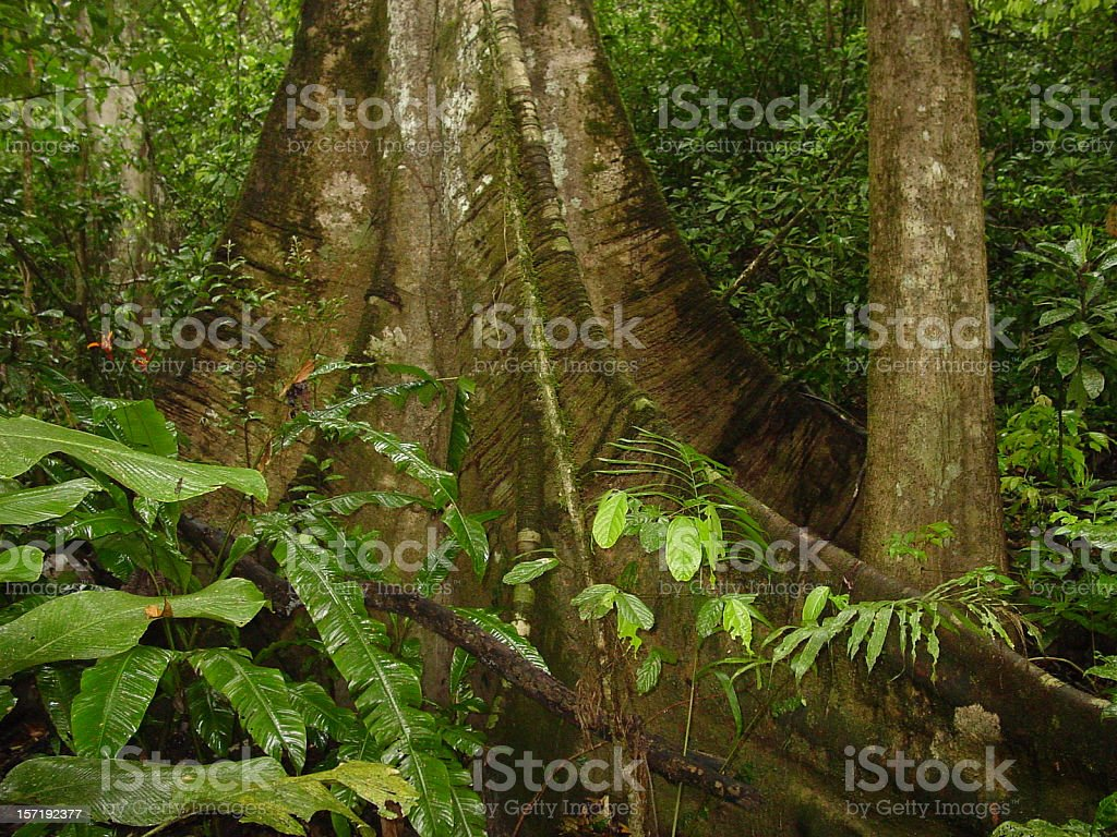 Rainforest giant closeup royalty-free stock photo