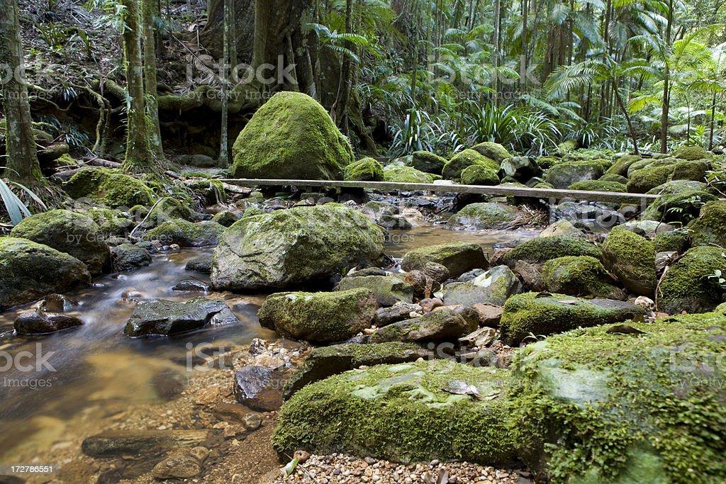 Rainforest green stock photo