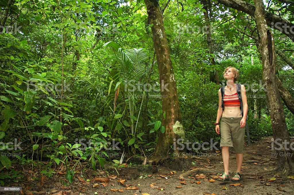 Rainforest hiking royalty-free stock photo