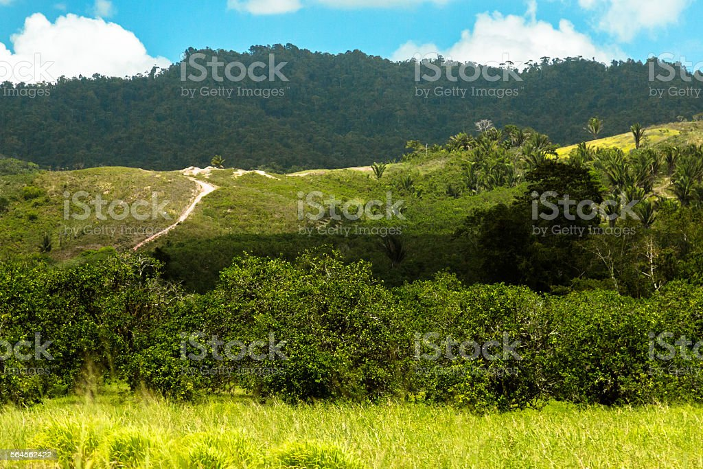 Rainforest in Belize stock photo