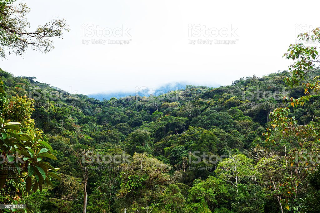 Rainforest in Cameron Highlands stock photo