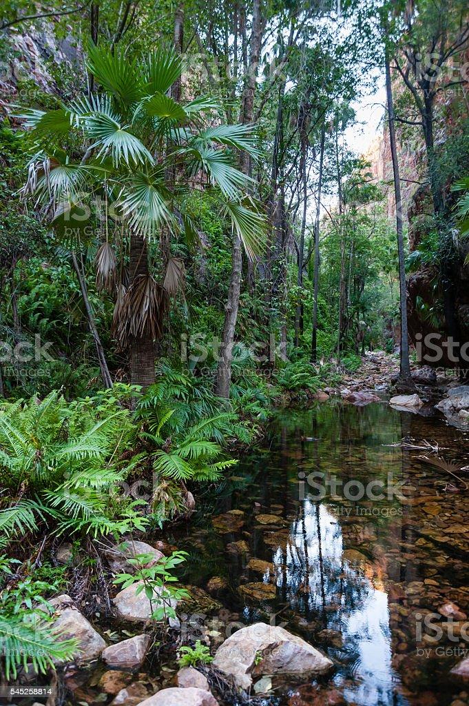 Rainforest in El Questro stock photo