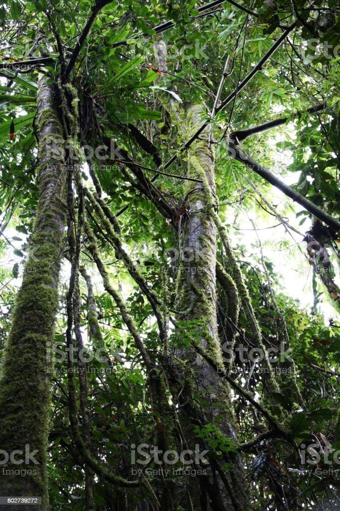 Rainforest in Madagscar stock photo