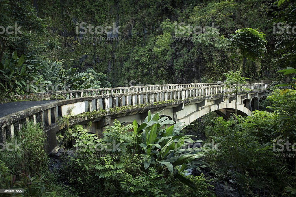 Rainforest in Maui, Hawaii. stock photo