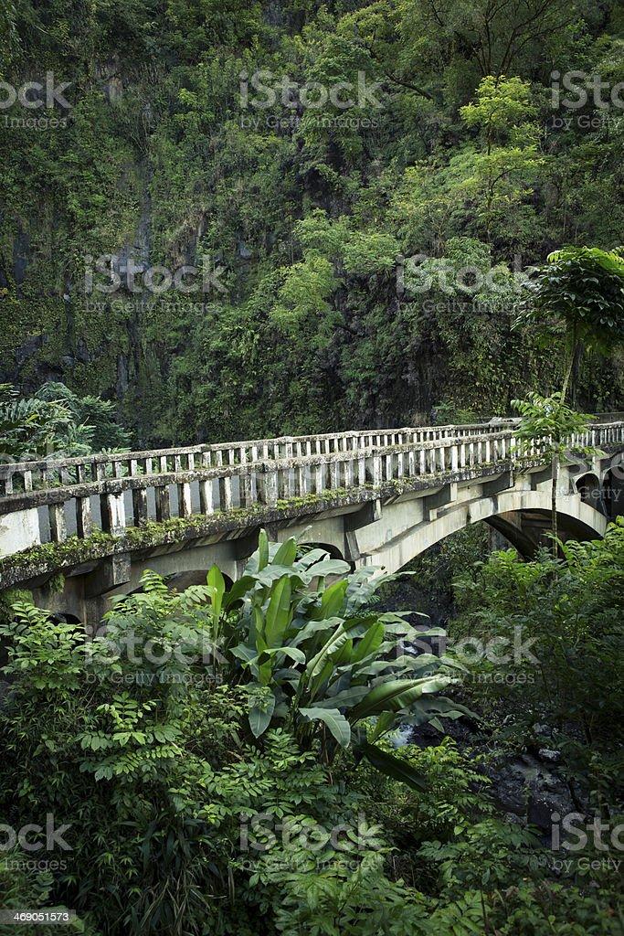 Rainforest in Maui, Hawaii. royalty-free stock photo