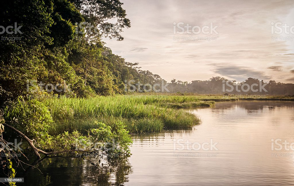 Rainforest in Peru royalty-free stock photo