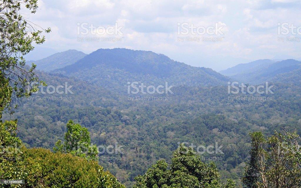 Rainforest in Taman Negara National Park stock photo