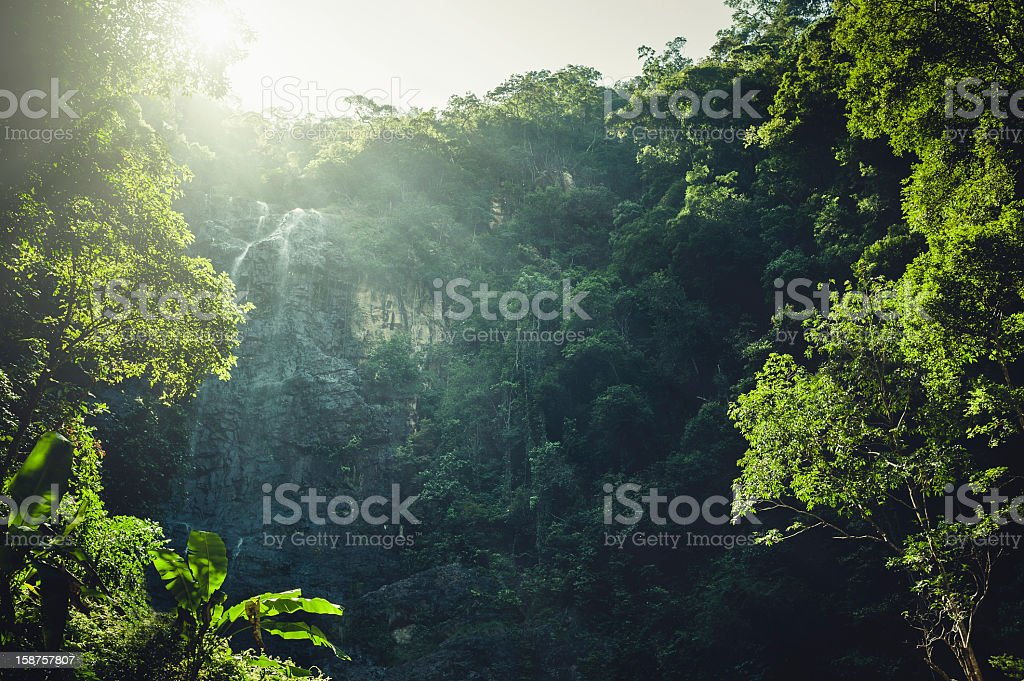 Rainforest jungle rock face with a small waterfall royalty-free stock photo