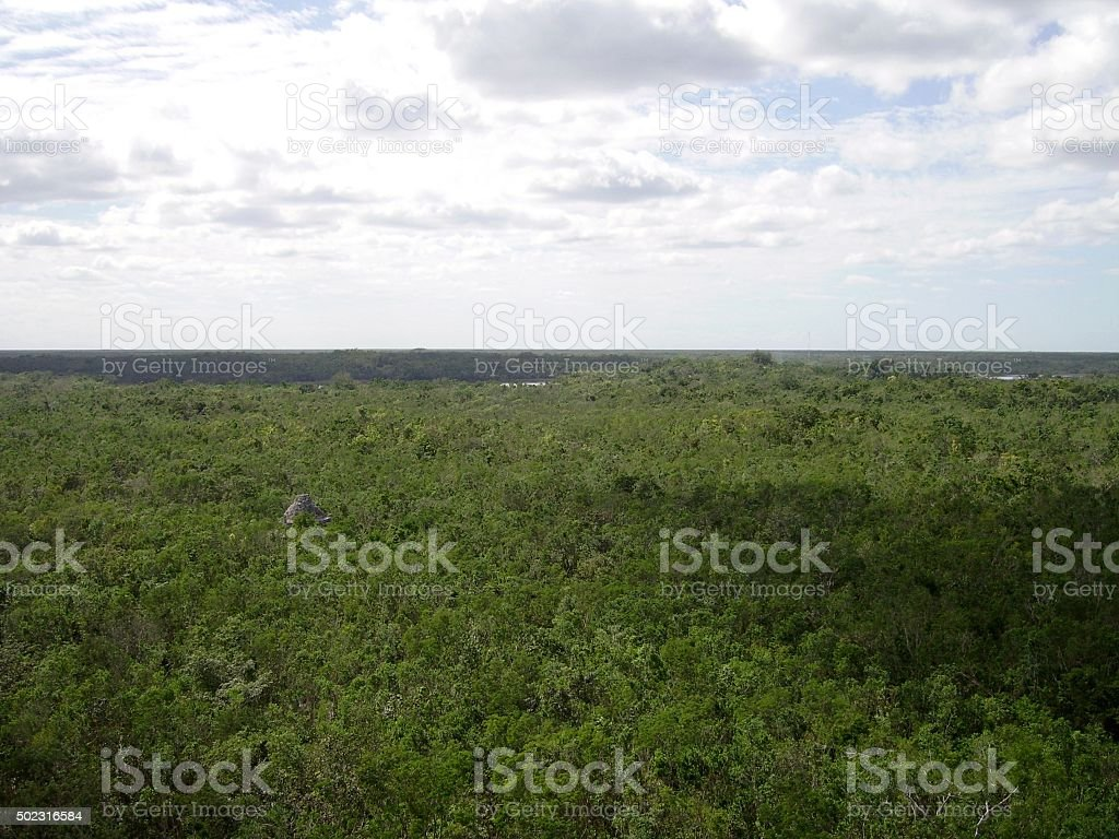 Rainforest Landscape from Nohoc Mul pyramid in Coba, Mexico stock photo