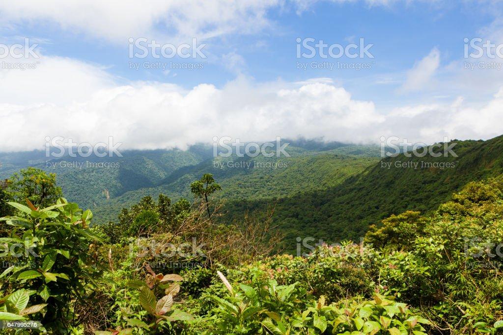 Rainforest landscape in Monteverde Costa Rica stock photo