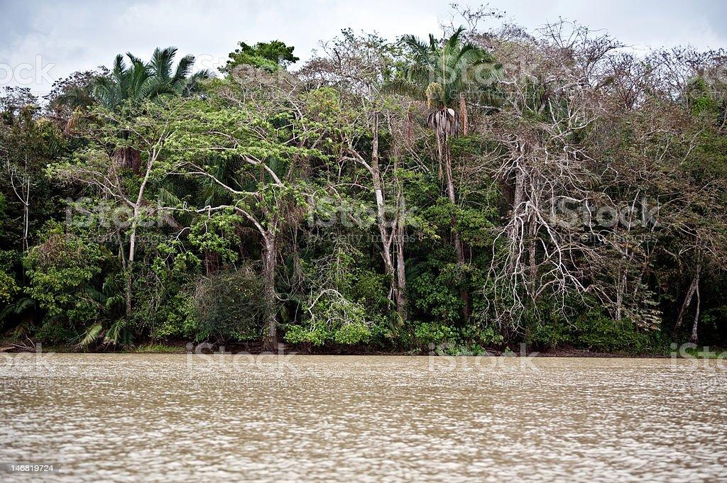 Rainforest landscape in Panama royalty-free stock photo