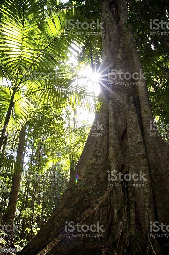 Rainforest Light royalty-free stock photo