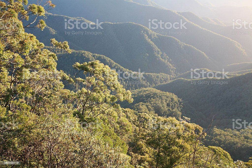 Rainforest Morning royalty-free stock photo