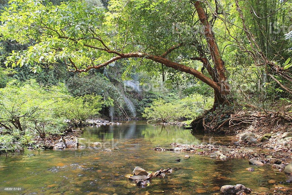 Rainforest of Khao Sok National Park in Thailand stock photo