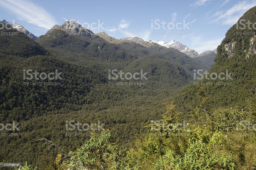Rainforest of the Doubtful Sound stock photo