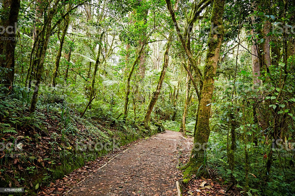 Rainforest on Mt Kilimanjaro stock photo
