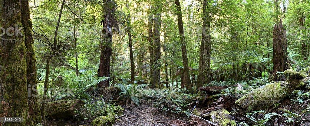 Rainforest Panorama royalty-free stock photo