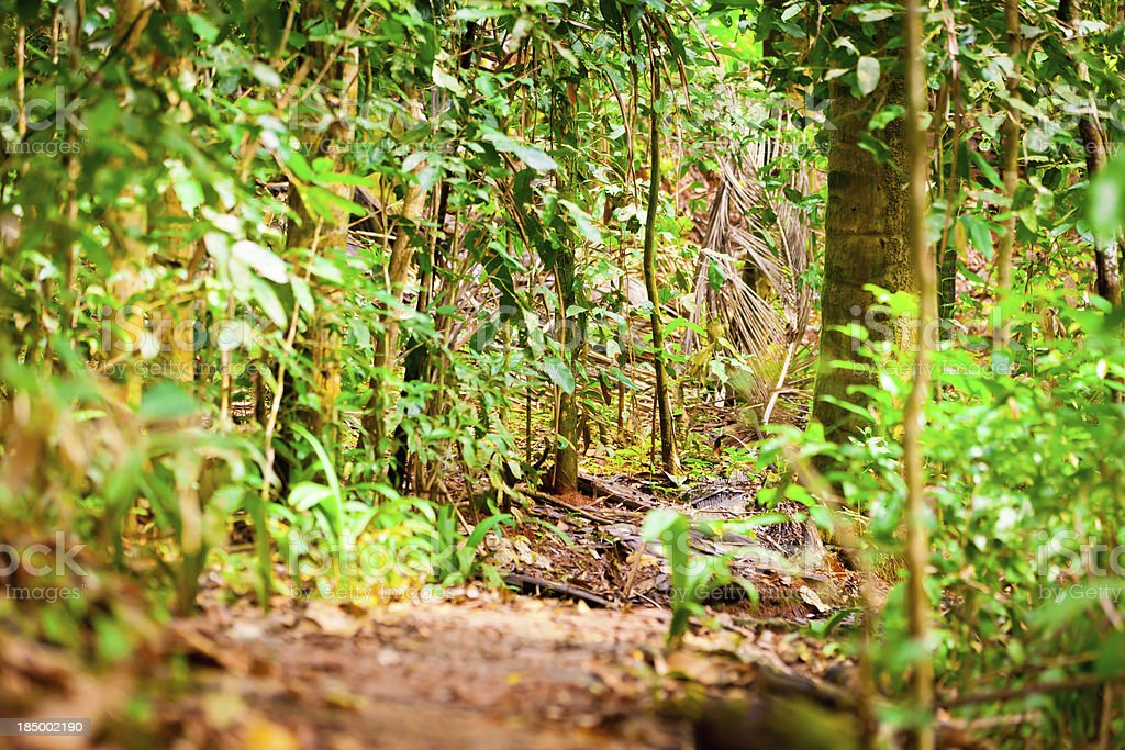 Rainforest Path Costa Rica royalty-free stock photo