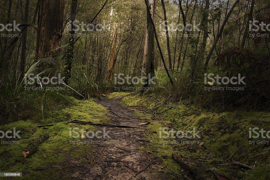 rainforest path royalty-free stock photo