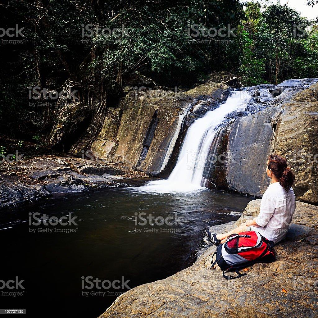 Rainforest royalty-free stock photo