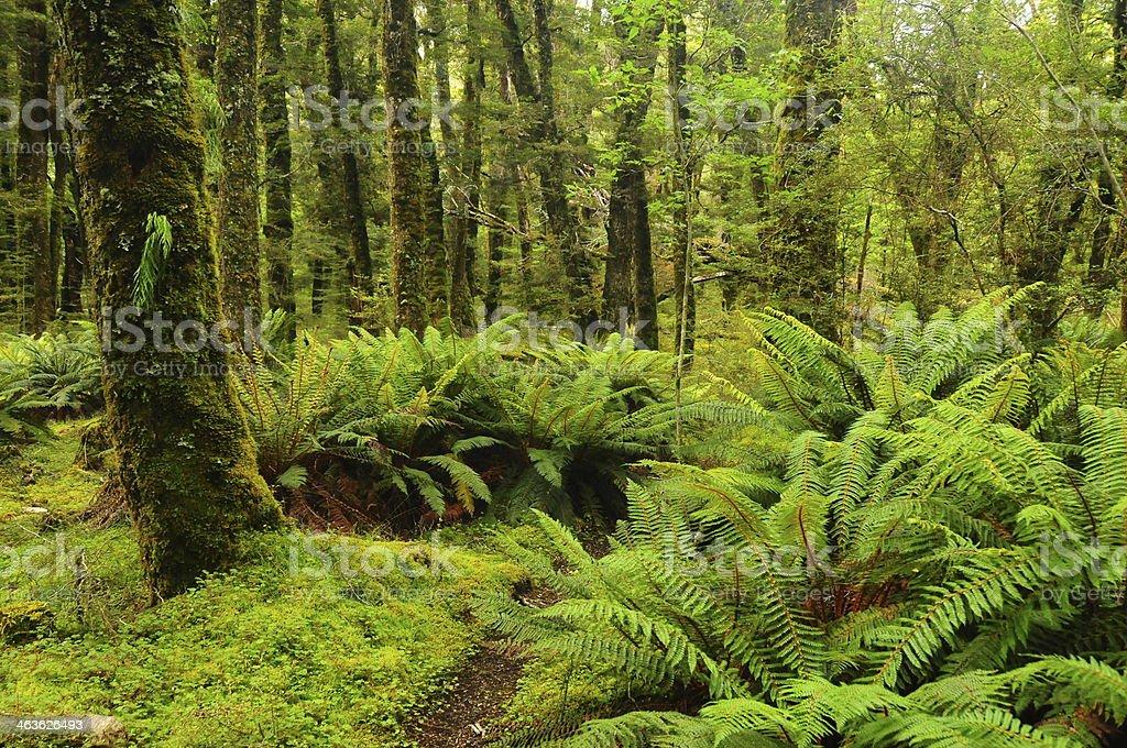 Floresta tropical foto royalty-free
