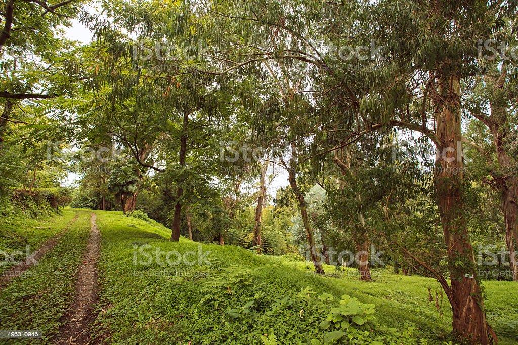 rain-forest stock photo