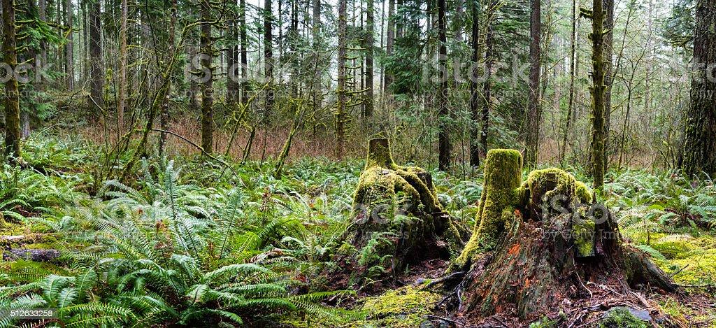 Rainforest stock photo