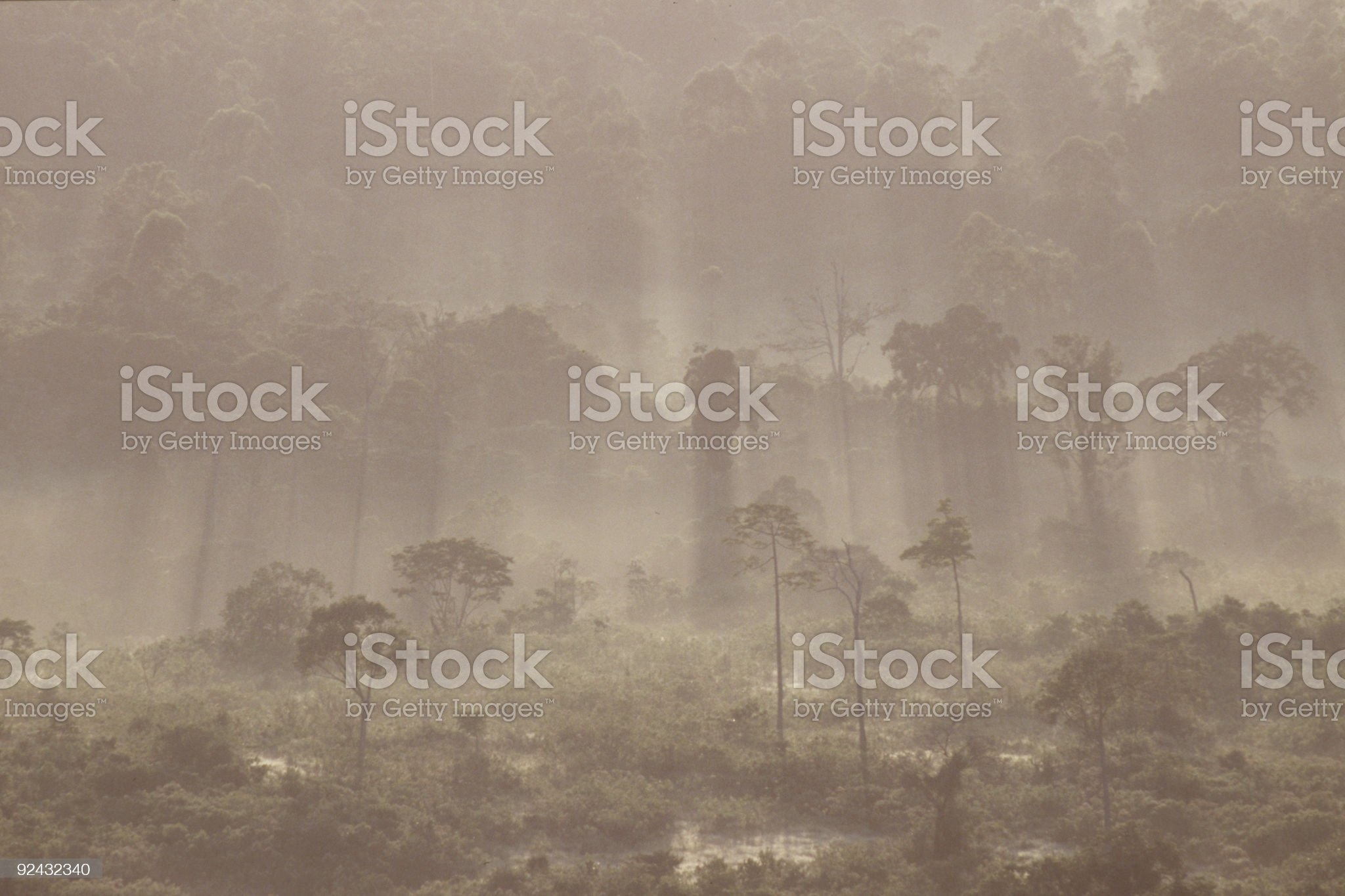 Rainforest royalty-free stock photo