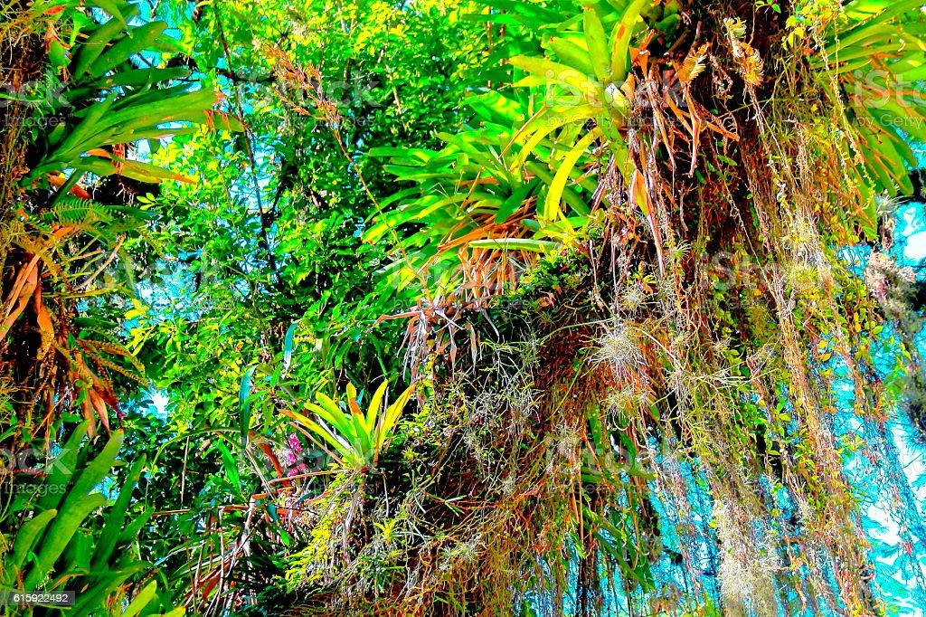 Rainforest plants profusion. stock photo