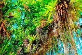 Rainforest plants profusion.