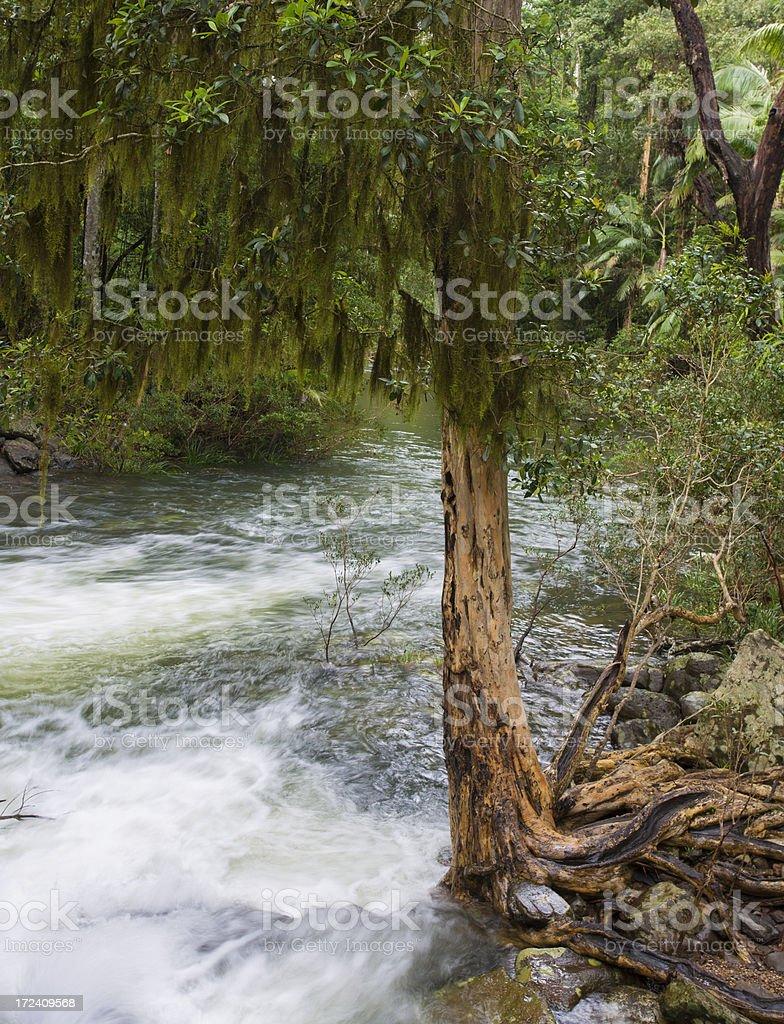 Rainforest Rapids royalty-free stock photo