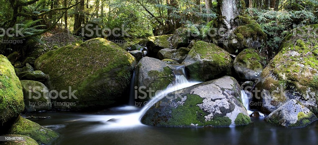 Rainforest River Panorama royalty-free stock photo