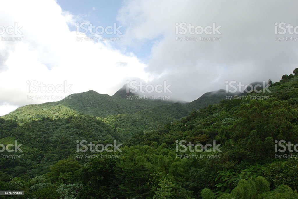 Rainforest Sky royalty-free stock photo