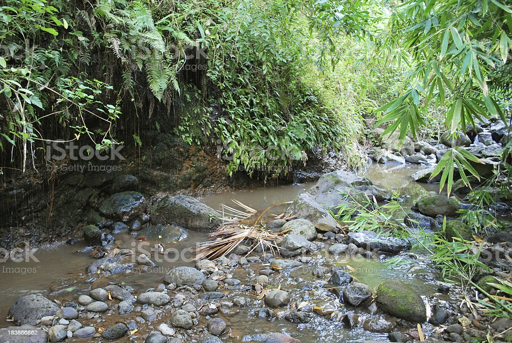 Rainforest Stream in Hawaii royalty-free stock photo
