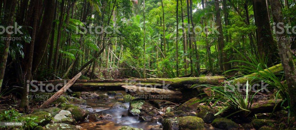 Rainforest Stream Panorama royalty-free stock photo