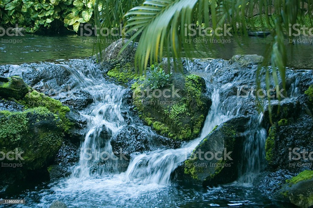 Rainforest Stream stock photo