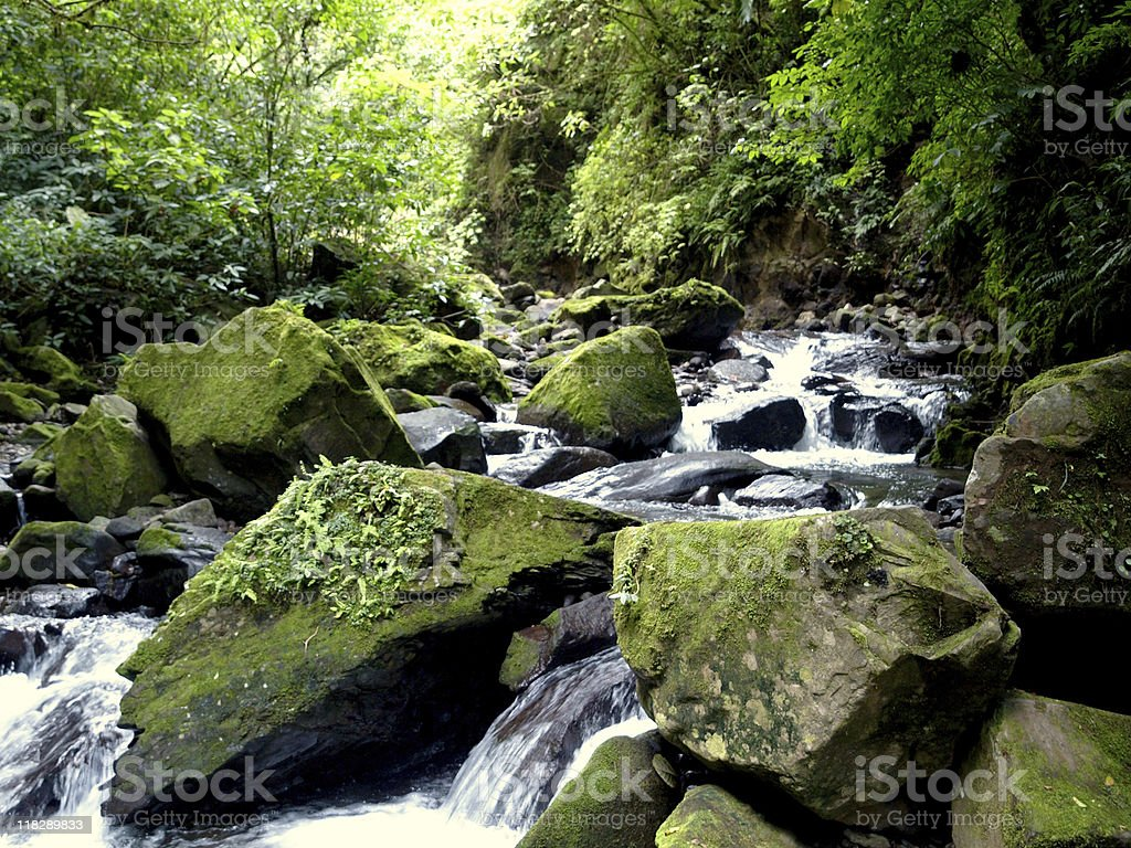Rainforest stream royalty-free stock photo