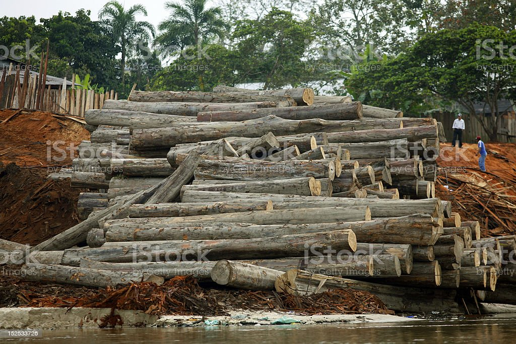 Rainforest timber cut from the Peruvian Amazon royalty-free stock photo