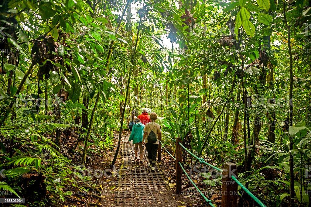 Rainforest trail stock photo